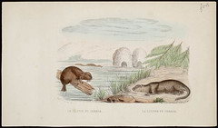 Beaver of Canada, Otter of Canada / Le Castor du Canada, La Loutre du Canada (BiblioArchives / LibraryArchives) Tags: canada france lac beaver collection peter otter canadaday winkworth castor canadiana bac doeuvres loutre tsas libraryandarchivescanada canadiennes guill fteducanada bibliothqueetarchivescanada