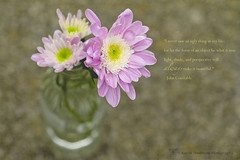 The Posie eDition (k4wea) Tags: pink white flower beautiful yellow bottle pretty quote edited textures chrysanthemum posie shallowdof explored texturetuesday 178366 dailyishphoto beyondlayers highestposition79