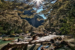 Morning sun on a stream (The Burgys) Tags: new newzealand sun nature creek forest walking island stream track hiking south hike trail zealand southisland sunbeam hdr routeburn routeburntrack
