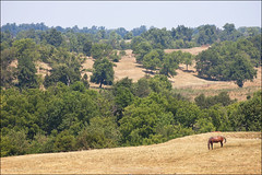 Peaceful Hills (Tom Gill.) Tags: horse field day cloudy kentucky farmland battlefield rollinghills boylecounty perryville battleofperryville