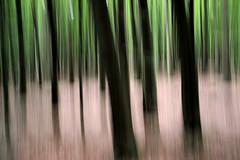Waldesruhe // Silent Woods (Werner Schnell Images (2.stream)) Tags: wood forest buchenwald woods wald ws buchen waldesruhe