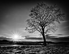 Sonnenuntergang (Setekh81) Tags: schnee winter thüringen sw