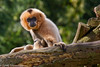 Monkey (sealbe) Tags: animals aap olmsezoo