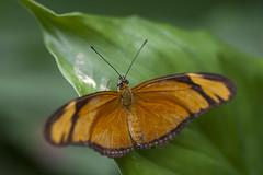 Butterfly Effect (Djenzen) Tags: butterfly zoo emmen vlinder dierentuin dierenpark
