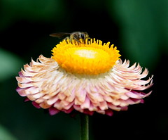 Eye Spy - Explored! (@mons.always) Tags: flowers macro fauna flora nikon insects bugs bee d90