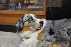 Strike a Pose (zackg22110) Tags: dog rock oregon store bach astoria