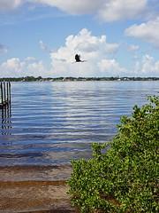 blue heron and marina (foto*grafo) Tags: blue heron marina summer florida water zuiko canon 28mm manualfocus