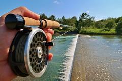 Fishing with Hardy Marquis,Hokkaido,Japan (namhdyk) Tags: hardy marquis hardymarquisflyreel flyreel flyfishing japan hokkaido river canon canonpowershot canonpowershotg7x