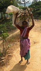 DSCN3792 (che1899) Tags: srilanka ella