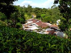 DSCN3793 (che1899) Tags: srilanka ella