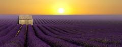 Le Cabanon ensoleill......... (Malain17) Tags: lavender