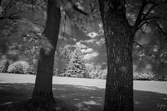 A Beast of Nature (jrseikaly) Tags: montral qubec canada ca infrared black white bnw bw tree trees nature ir