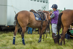 IMG_0944 (ElsSchepers) Tags: belgianpolotrophy lions hasselt polo paarden horses