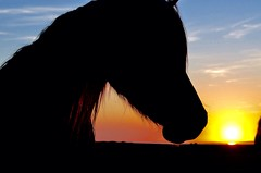 Watching the sun set... (Moments in...) Tags: horse horsehead shadow s silhouette sun sunset penclawdd wild wildhorse nature nikon5100 wales gower sightseeing