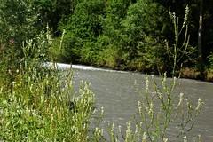 Verbier - Martigny-Croix (25.07.16) 64 (rouilleralain) Tags: val dentremont de bagne rando valais