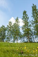 warm day at home (Fjola Dogg) Tags: 2016 fjoladogg fjladgg nature nttra is pad padfjoladogg md mdfjladgg islanda izlanda izland ijsland islando island lislande sland naturaleza natur natura naturae n natuur naturen naturalesa natureza syrasel