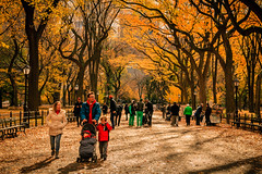 Autumn in New York City (Pablo.Barros) Tags: newyorkcity autumn centralpark fall themall travel travelphotography fotografiadeviagem viagem yellow orange