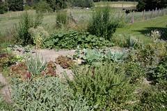 My garden (XIV) (dididumm) Tags: garden fourthyear summer growing green vegetables herbs flowers blumen kruter gemse grn wachsen sommer viertesjahr garten