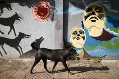 (Md. Imam Hasan) Tags: street streetphotographer streetphotography muhammadimamhasan dhaka bangladesh candid decisivemoment people photography photographer mobile nonhuman dog animal
