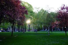 Sunset on the Tamajdan Park, Belgrade (Lepidoptorologic beauty*) Tags: fuji serbia beograd belgrad srbija x100 tamajdan fujix100 fujifilmfinepixx100