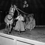 Robert Bros Circus at Welshpool