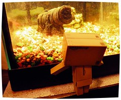 Danbo and the Fish Tank (ghostsecurity28) Tags: fun toy toys amusement robot candy creative books kinder surprise sweets imagine imagination peeps piccy danbo revoltech danboard elementsorganizer