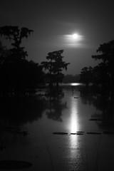 Full Moon Swamp Vertical (Scott Mohrman Photography) Tags: trees sky lake reflection tree night clouds reflections scott photography photo martin photos bayou swamp cypress 2012 mohrman