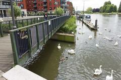 River Thames, KT1 (Tetramesh) Tags: uk greatbritain england london walking walks unitedkingdom britain walk londres londra londen londinium lontoo llondon londonloop londone londyn llundain londn  londain londono davidsharp tetramesh londrez  loundres londr londonouterorbitalpath lndra