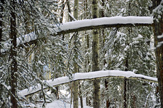 Winter (b.aarsteinsen) Tags: trees winter snow forest woods branches scenic treebranches infocus highquality