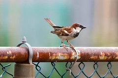 6M3C6005 (invertalon) Tags: birds canon lens backyard colorful bokeh tc l 5d teleconverter 70200mm markiii 5d3 5dmarkiii 70200ii 5diii stevenfranczek 2xiii stevefranczek