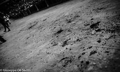 Siena: Palio Reportage (<-- Giuseppe De Santis -->) Tags: canon siena palio canonef35mmf14lusm giuseppedesantis canoneos5dmarkii