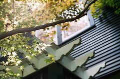 DOW MAPLES (La Branaro) Tags: plants slr mamiya film rollei garden spring maple michigan japanesemaple 35mmfilm midland centralmichigan dowgardens nc1000s nc1000 digibasecn200 dowhouse rolleicn200 herbertdow