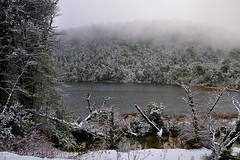 Laguna El Toro  - P.N. Puyehue (Chile) (Noelegroj (Happy New Year 3.5 million views +!)) Tags: chile trip travel viaje trees winter patagonia naturaleza snow nature for
