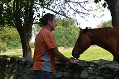 Man and the Horse (Loreen Ritter) Tags: horses horse field animals manandhorse twohorses friendlyhorses horseandtree newporthorses horsesbytree