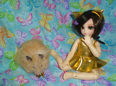 P1190704 (CharmeC) Tags: pet doll hamster bjd fairyland rolly syrian ltf littlefee