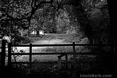 Coopers Hill Slopes, off Runnymede, Surrey (louisberk) Tags: trees bw film field fuji kodak surrey portra runnymede 160 gsw690iii gupr coopershillslopes