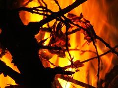 Hot Heat (5of7) Tags: wood red orange black hot macro leaves silhouette yellow night canon fire leaf flames powershot burning flame burn heat serene fav sx30
