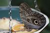 Butter-Fly? (Djenzen) Tags: butterfly zoo emmen vlinder dierentuin dierenpark