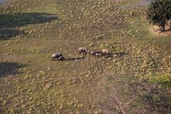 XVI (www.mattprior.co.uk) Tags: adventure adventurer journey explore experience expedition safari africa southafrica botswana zimbabwe zambia overland nature animals lion crocodile zebra buffalo camp sleep elephant giraffe leopard sunrise sunset