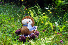 Relaxen auf der Blumenwiese (ingrid eulenfan) Tags: natur nature wiese feld meadow eule euli relaxen liegestuhl owl