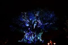 Animal Kingdom Aug 2016 #2 (*Amanda Richards) Tags: disney disneyworld orlando animalkingdom tree treeoflife nightshow lights night