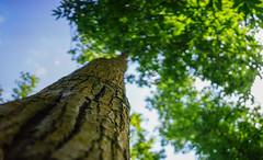 Sunny Tree (Jenny.Lawrence) Tags: nature trees green countryside walking sony a7