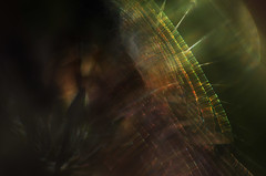 the outer reaches (pete ware) Tags: spiderweb hebe composite photoshop peteware macro helios extensiontubes nikond7000
