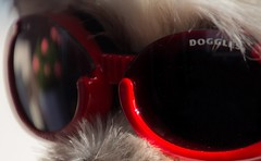 DOGGLES (BLEUnord) Tags: macro mondays macromondays macrophotographie macrophotography olympiques olympics games jeux google googles doggle doggles natation swimming hmm glass verres lunettes nage swim