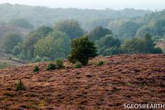 20160909-IMG_6145 (SGEOS AT EARTH) Tags: purple heather paarse heide posbank veluwe rheden landscape landschap canon sgeosearth early morning sunrise zonsopkomst