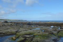 Sugar Sands, Northumberland (Fiona in Eden) Tags: northumberland holiday coast england beaches beach cliff sand sea sugarsands rockpools