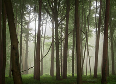 Spooky Forest (b_schaulich) Tags: spooky mysterious forest wood woods germany deutschland niedersachsen hankhausen mist fog nebel