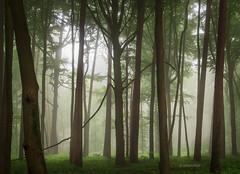 Spooky Forest (b_schaulich) Tags: spooky mysterious forest wood woods germany deutschland niedersachsen hankhausen mist fog nebel