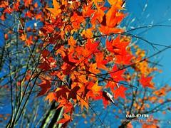 DAO-87138 (Chen Liang Dao  hyperphoto) Tags:   taiwan