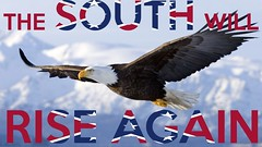The South Will Rise Again (Douglas Tofoli) Tags: reddit wallpapers homer alaska unitedstates midair baldeagle kenaipeninsulaborough 1 accipitridae agility animal animals landscape beauty bird birdofprey city claws cookinlet eagle flying gliding graceful gulfofalaska haliaeetus kachemakbay kenai kenaipeninsula northamerica northamericanpacificcoast northpacificocean ocean pacificocean people ruralscenes scenic seasons snow talons underneath usa water wildlife winter naturalworld mountain